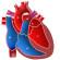 Entendendo as Cardiopatias Congênitas | Parte 1