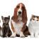 O que avaliar antes de ter um animal de estimação